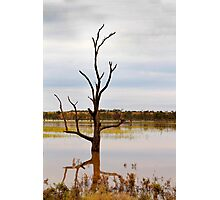 Dead Tree in the River Photographic Print