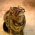 Kitty Portrait by Dragos Dumitrascu
