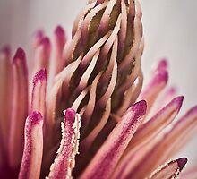 Organic by Samuel Gundry