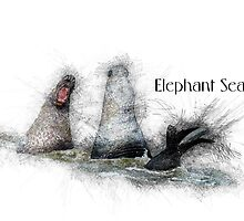 Elephant Seal Sketch by 2HivelysArt