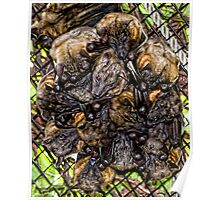 Straw-Colored Fruit Bats Poster