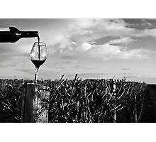 Vineyard at Dawn Photographic Print