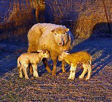 Frozen Golden Lambs by Quentin  Croft