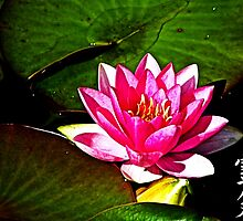 Reiki waterlily by Spadgie