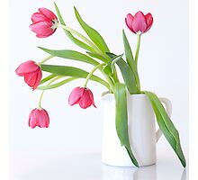 Tulips & Vase Photographic Print