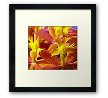 The Flower with a Face Framed Print