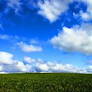 Field of Dreams by Natalie Ord