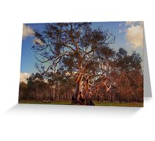 River Red Gums Greeting Card