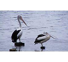Pelican Posts - Yamba Photographic Print