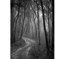 Don't Go Into The Woods Today. Photographic Print
