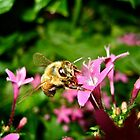 Busy Bee by KuharLambert