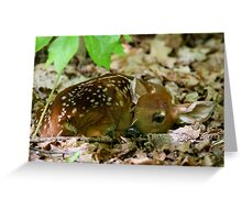 Newborn / White-tailed Deer Fawn Greeting Card