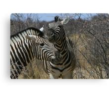Zebra Romance Canvas Print