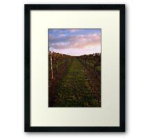 Vineyard at Dawn 2 Framed Print