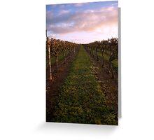 Vineyard at Dawn 2 Greeting Card