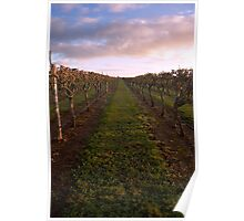 Vineyard at Dawn 2 Poster