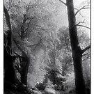 Beech Walk (2) by Mike  Waldron