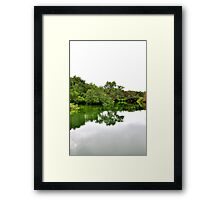 Mangrove Reflection Framed Print