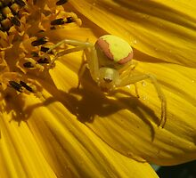 Perfect  Spot For  A Spider  by Tracy Faught