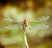 Dragon fly by Iuliana Evdochim