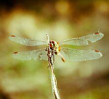 Dragon fly by Iuliana Evdochim