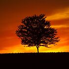 Lone Tree At Sunset by James Brotherton