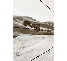 Barbwire Photographic Print