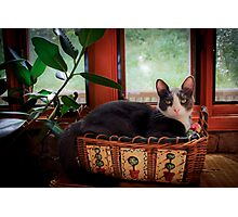 I'm All Ears! Photographic Print