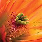 Orange Cactus Flower by JulieLegg