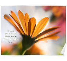 Daisy Backlit Poster