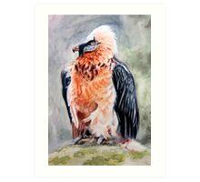 Bearded Vulture watercolour Art Print