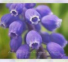 Muscari by JulieLegg