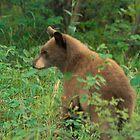 Bear cub by Eivor Kuchta