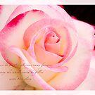 Rose Pink Edge by JulieLegg