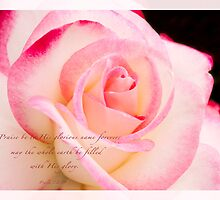 Rose Pink Edge by JulieLegg