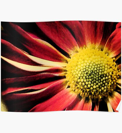 Bright Red and Yellow Flower Poster