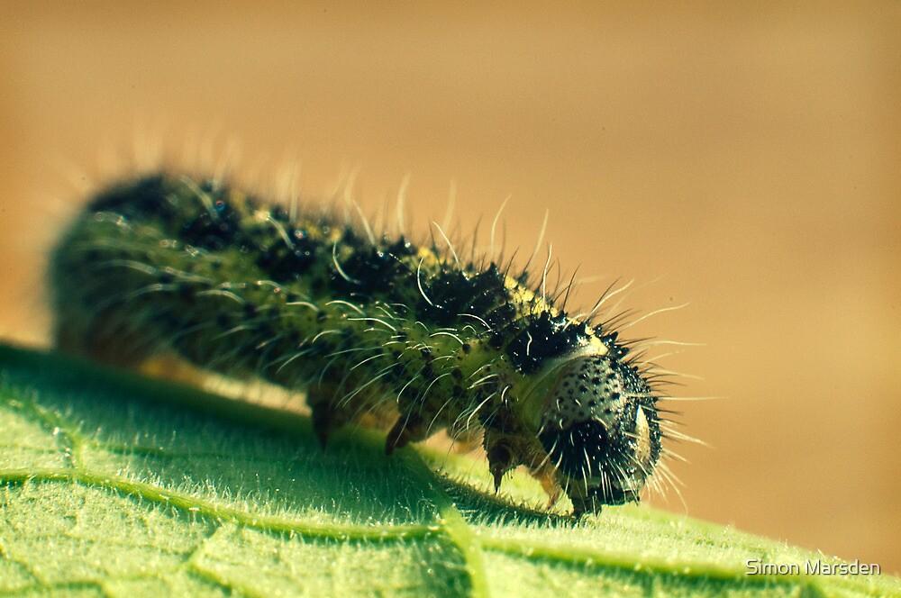 The Very Hungry Caterpillar  by Simon Marsden