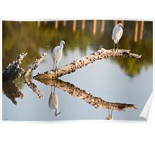 EGRETS HANGING OUT Poster