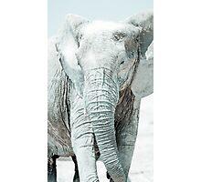 Bull elephant - Etosha National Park Photographic Print