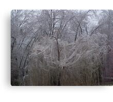 icy willow Canvas Print