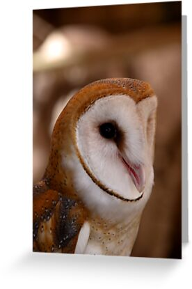 Barn Owl by Gail Falcon