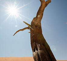 Reaching for the Sun by Sally  Wellbeloved