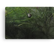 The world beneath the Potomac - Underwater take off Canvas Print