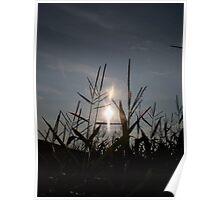 Sunshine Stalks Poster