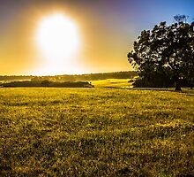 Country Air by age-photography