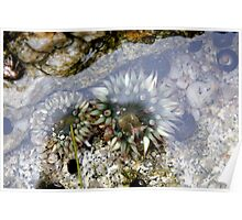 Tide Pool  Poster