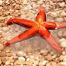 Sea star by aleksandra15