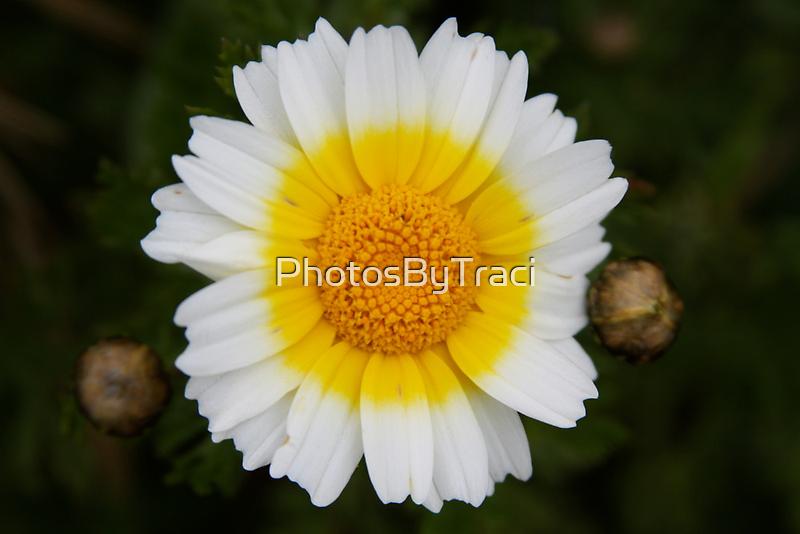Happy Flower by PhotosByTraci