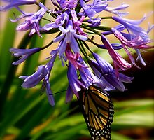 Upside Down Butterfly by PhotosByTraci