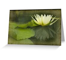 White Water Lily Texture Greeting Card